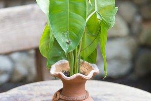 Pottery Vase tree