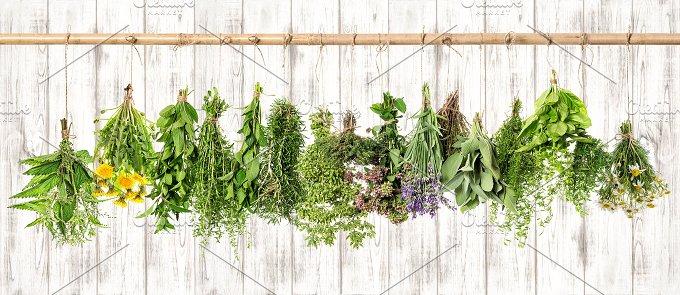 Medicinal herbs. Herbal apothecary - Health