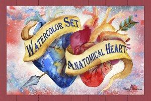 Anatomical Heart Watercolor Set