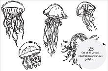 Jellyfish, vector