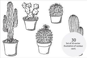 Cacti, vector
