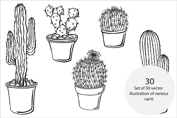 Cacti, vector in Illustrations