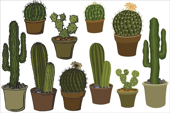 Cacti, vector in Illustrations - product preview 3
