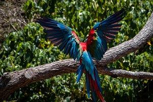 Macaw Landing