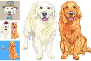 Set of dogs breed Golden Retriever