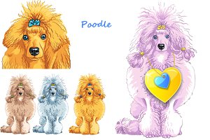 Set of dogs breed Poodle