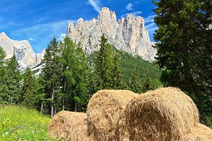 Dolomiti - alpine pasture