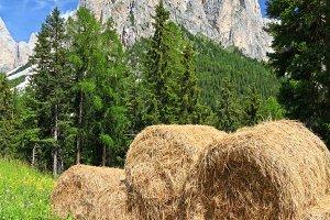 alpine pasture in Dolomites