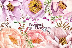 Watercolor peonies flowers clipart