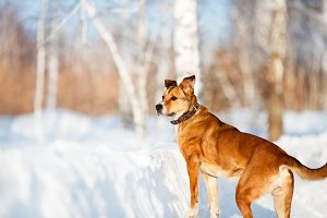 Dog portrait in winter forest