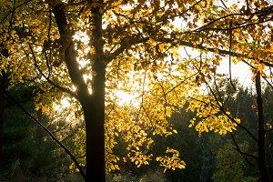 Fall leaves lit up (portrait)