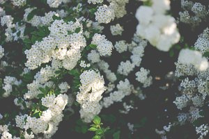 Moody white blooms