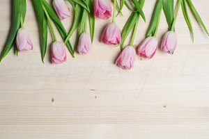 Tulips on Light Wood Styled Desktop