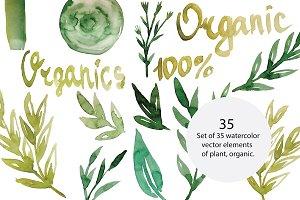 Organic plants, vector