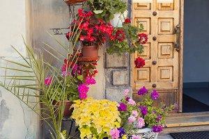 Flowers in pots near wall. Vertical