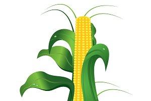 Corn, cob, ripe