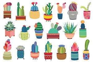20 Succulents & Cactus Vector / PNG