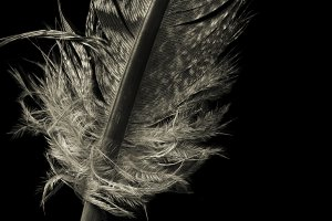 Feather/LARGE