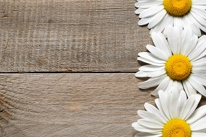 Daisy flowers on old wood