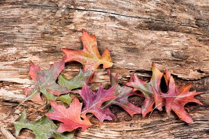Autumn leaves and old wood