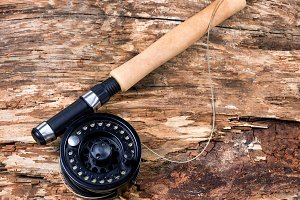 Fishing reel on old tree