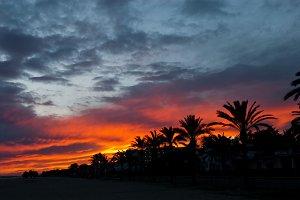 palm trees sunset background