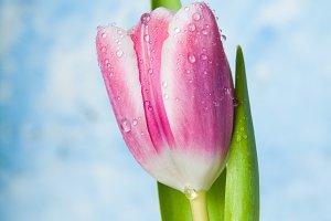 Springtime fresh
