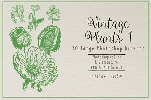 Vintage Plants 1 Photoshop Brushes