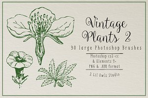 Vintage Plants 2 Photoshop Brushes