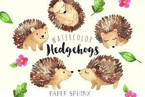Sweet Hedgehog Watercolor Pack