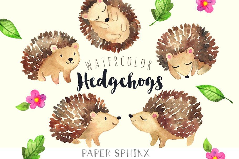 Sweet Hedgehog Watercolor Pack Custom Designed Illustrations Creative Market