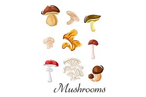 Edible and toxic mushrooms