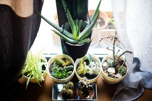 many plants at home