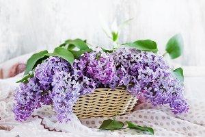 fresh lilacs in a basket