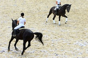 Jokeys on dressage horses