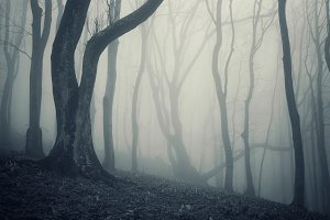 Haunted forest with fog on Halloween