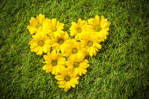 Flowers in heart shape on the grass.