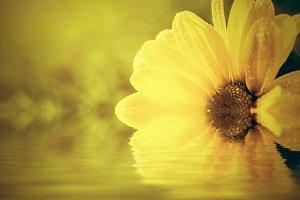 Spring flower in water. Sunlight.