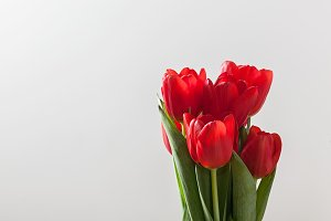 Red tulip flowers bouquet.