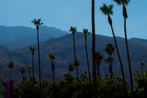 Palm Trees, Mountains and Sunshine