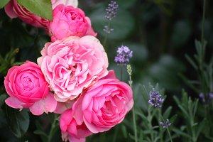 Valentines Roses Lavender Bouquet