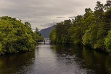 Wide river surrounded by green trees