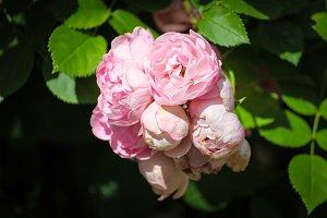 Valentines Roses Bouquet