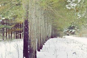 Pine Line
