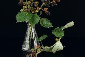 branch blackberry in a glass bottle
