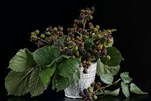 bouquet of blackberry