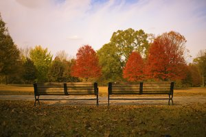Park Benches on a Fall Day