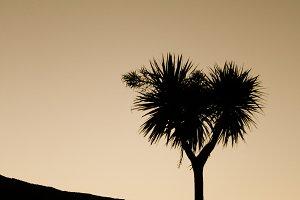 Kiwi Tree