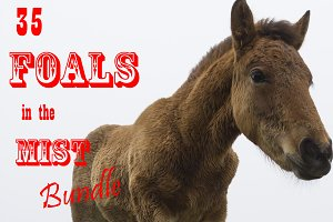 35 Foals in the mist - bundle