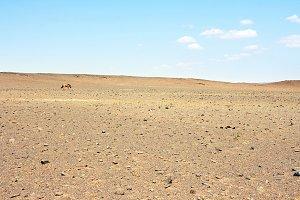 Horse in a desert